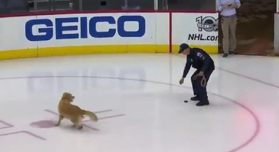 dog plays fetch with hockey puck