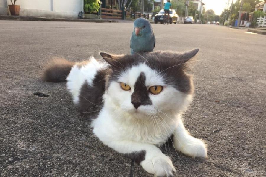 bird riding on cat's back