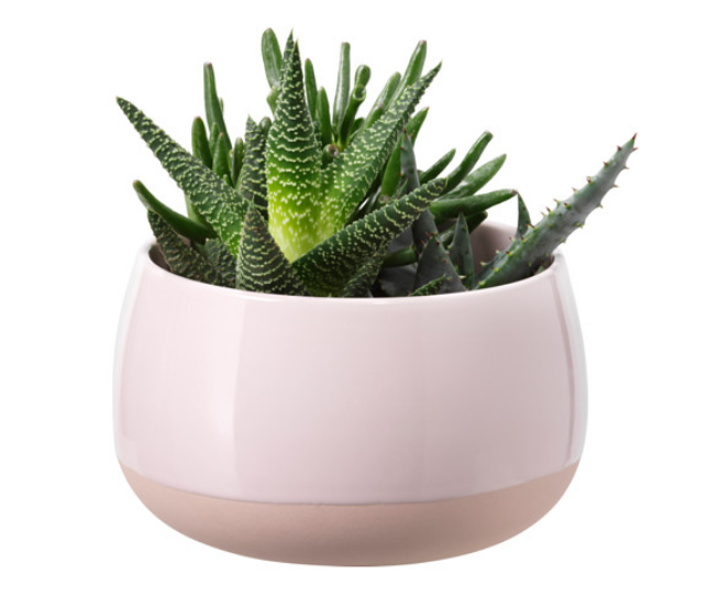 ikea-plant.png