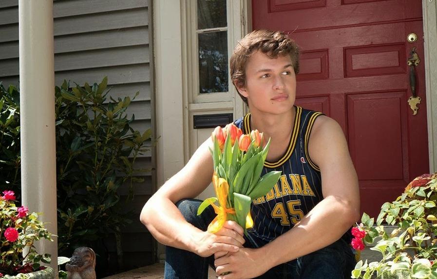 Picture of Augustus Tulips