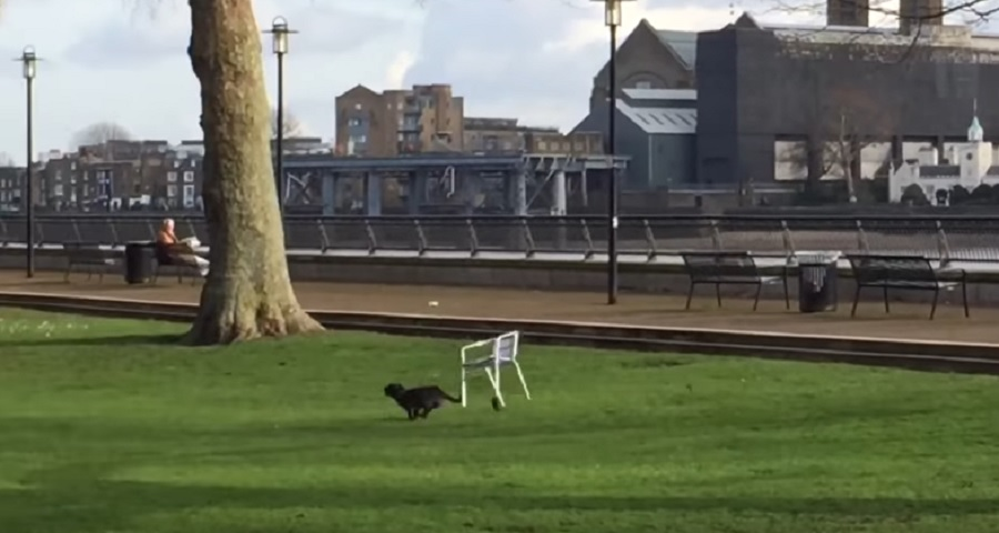 dog running tied to chair