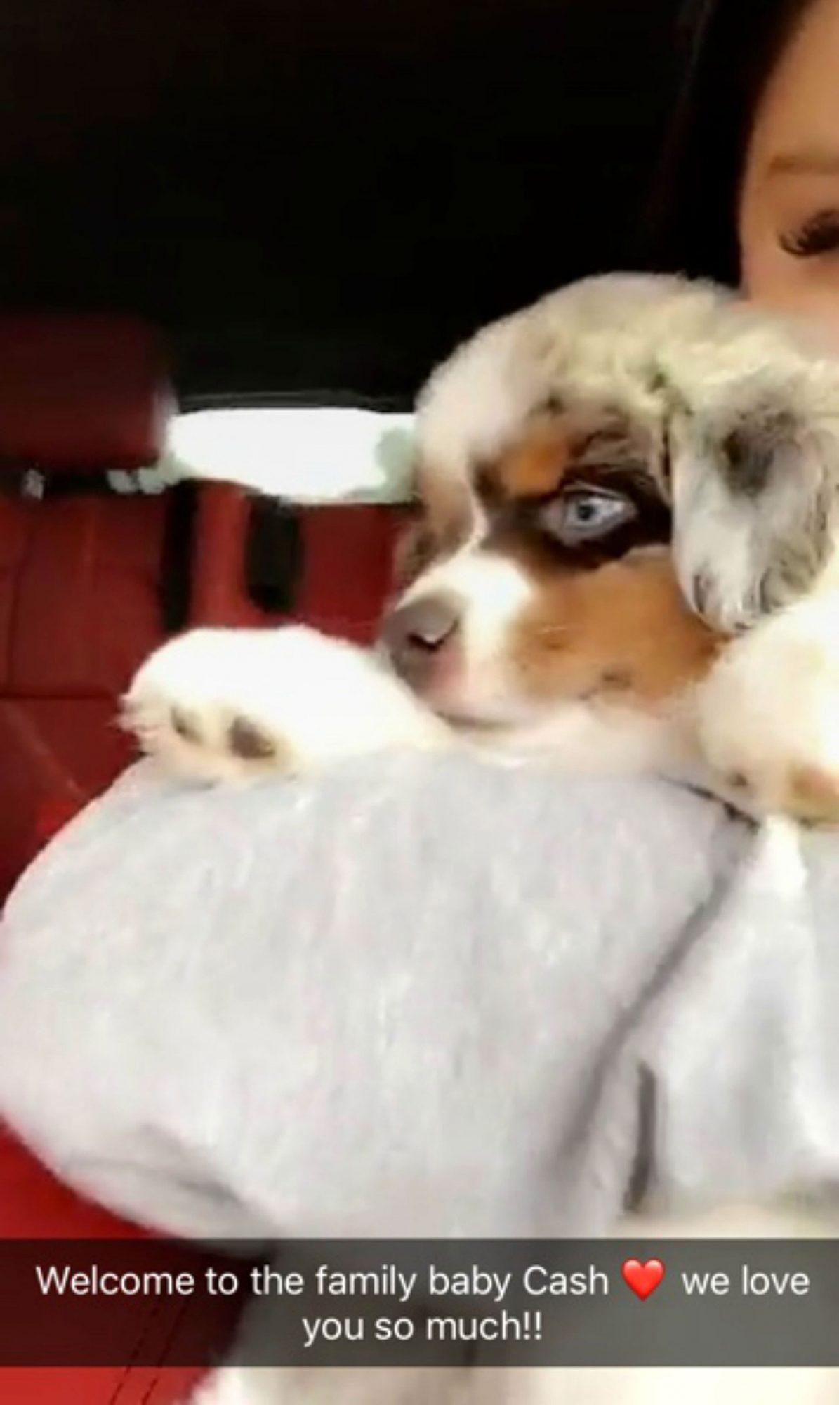 ariel-winter-puppy-12.jpg