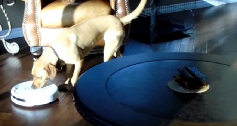 dog turns off roomba