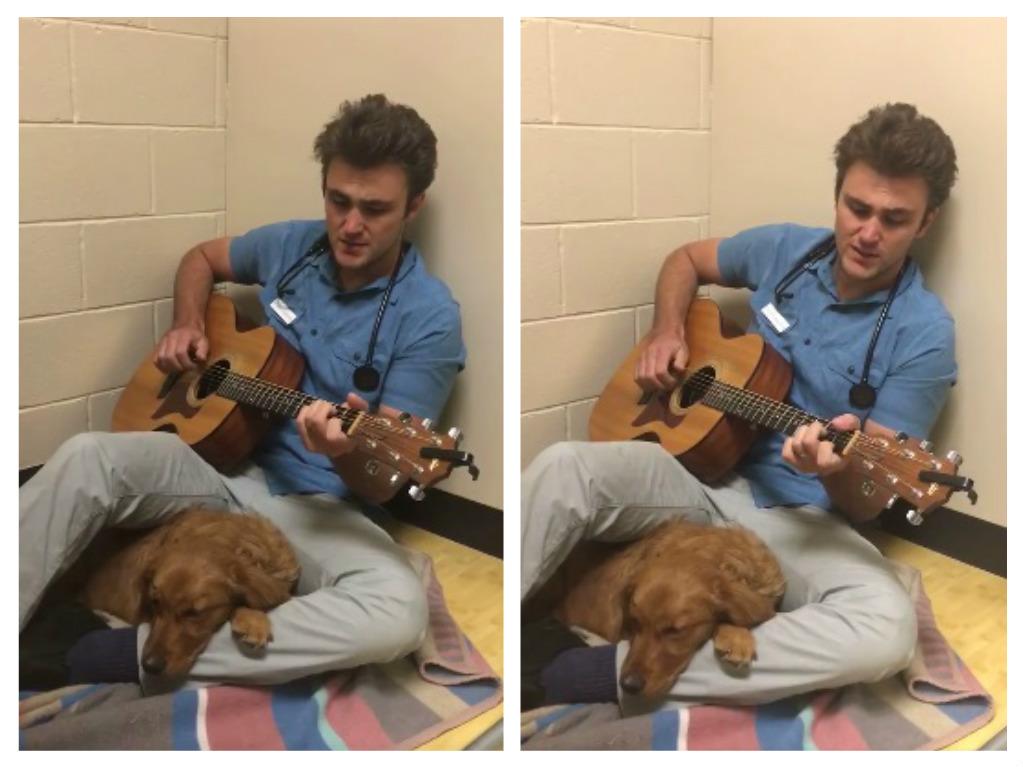 vet serenades nervous dog before surgery