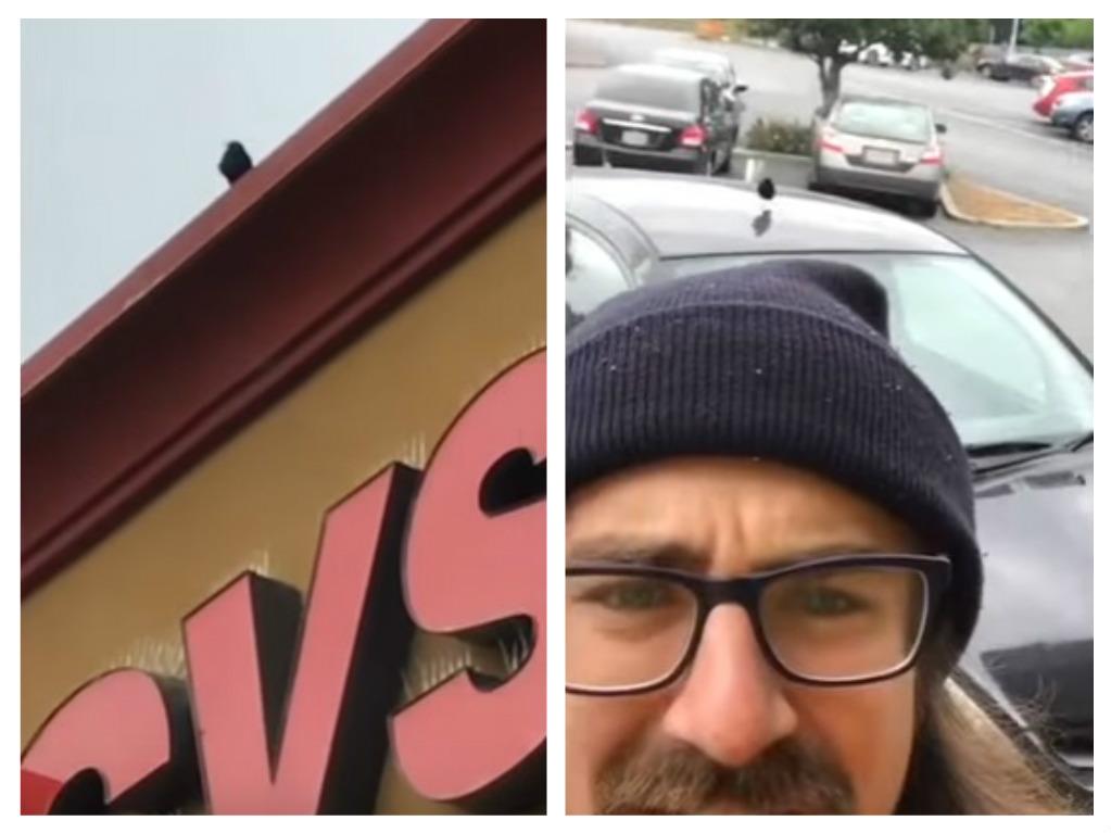bird attacks trader joes worker