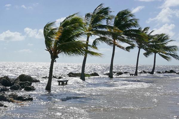 sea-rising-palms