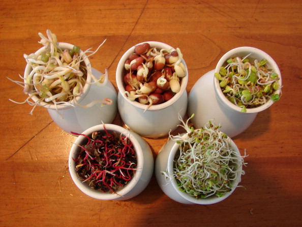 A variety of sprouts, which can make you sick