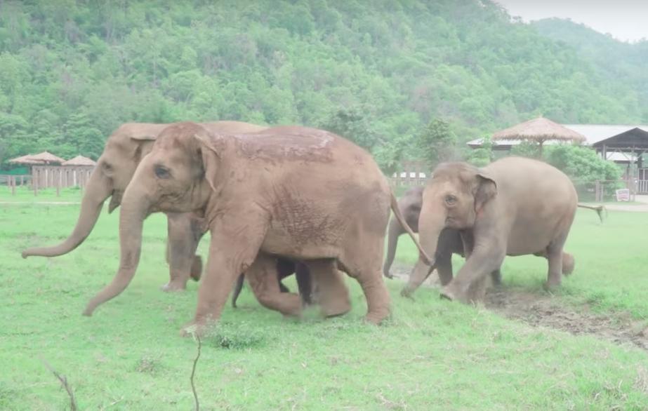 Image of elephants running