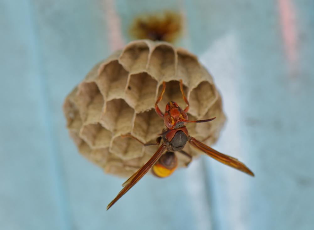 Hanging wasp net.