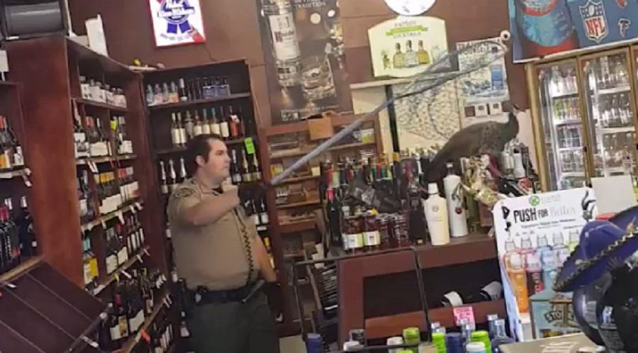 bird destroys liquor store