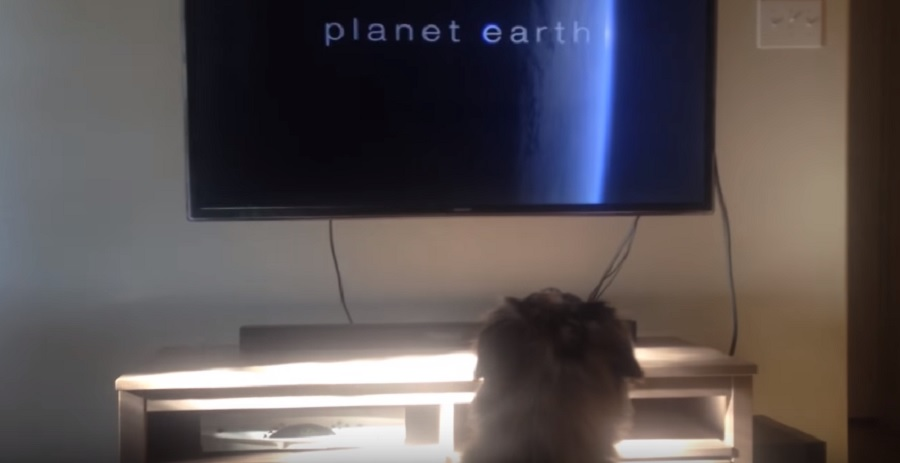 dog loves watching planet earth