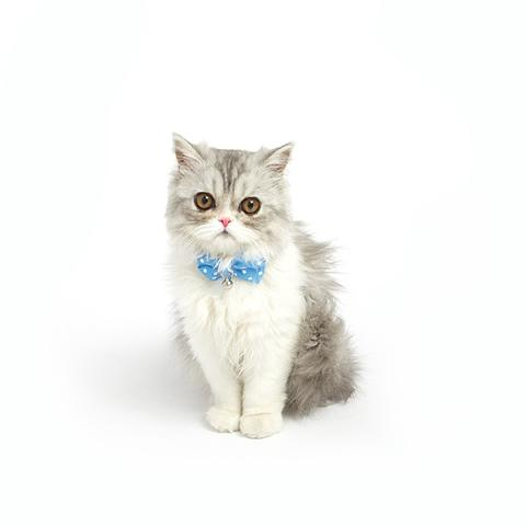 Bow_Tie_On_Cat_2_large
