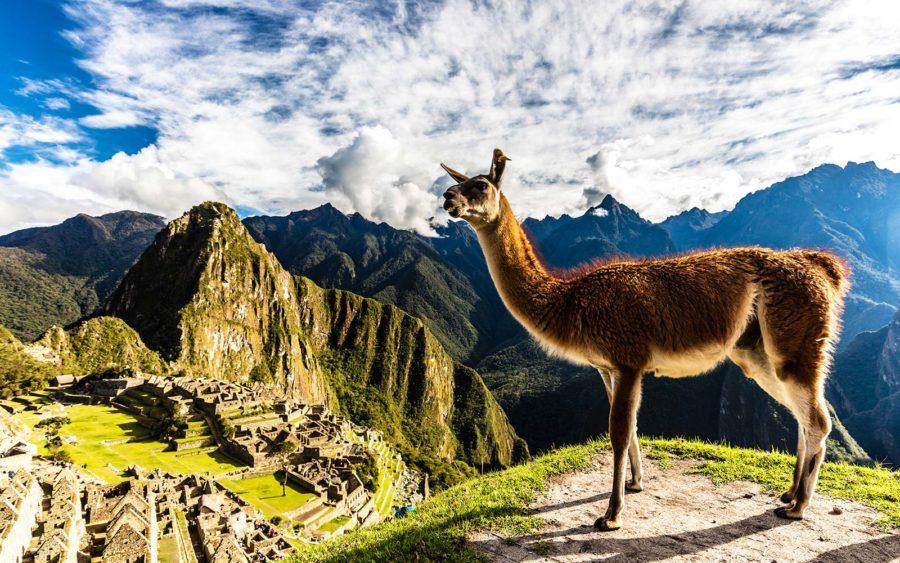 machu-picchu-alpaca-peru-PERUDEAL0617