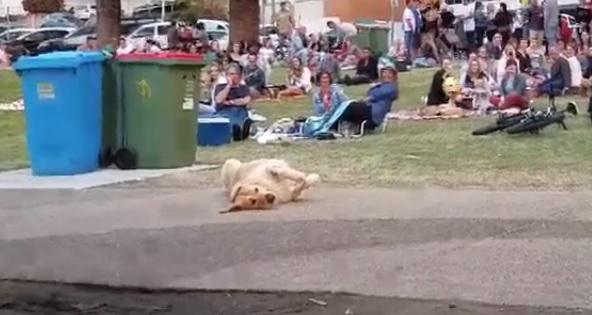 dog-park-playing-dead.jpg
