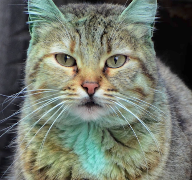 green-cat
