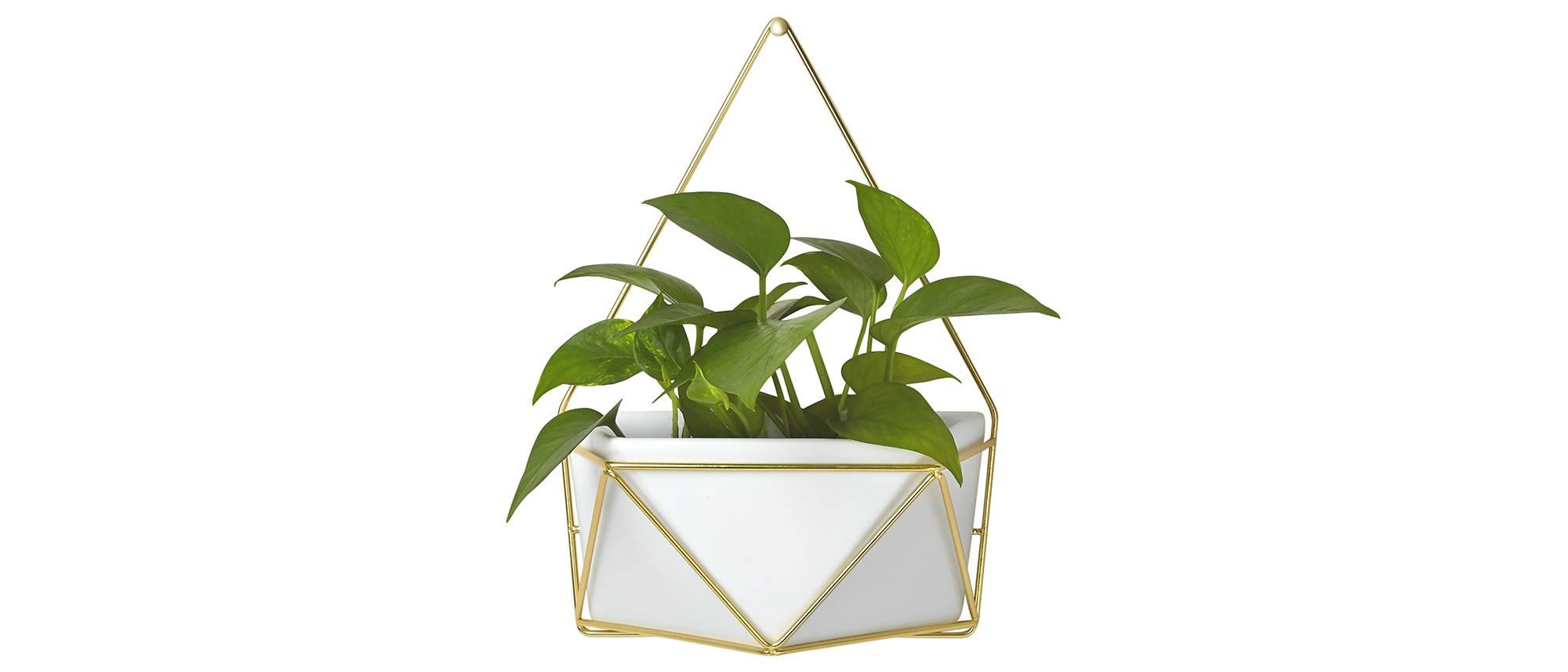 Succulent-Hanger-Target.jpeg