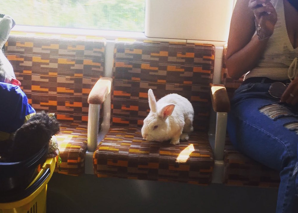 bunny on bus in London