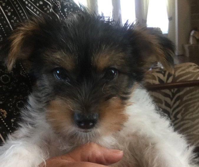 Cute puppy on Twitter