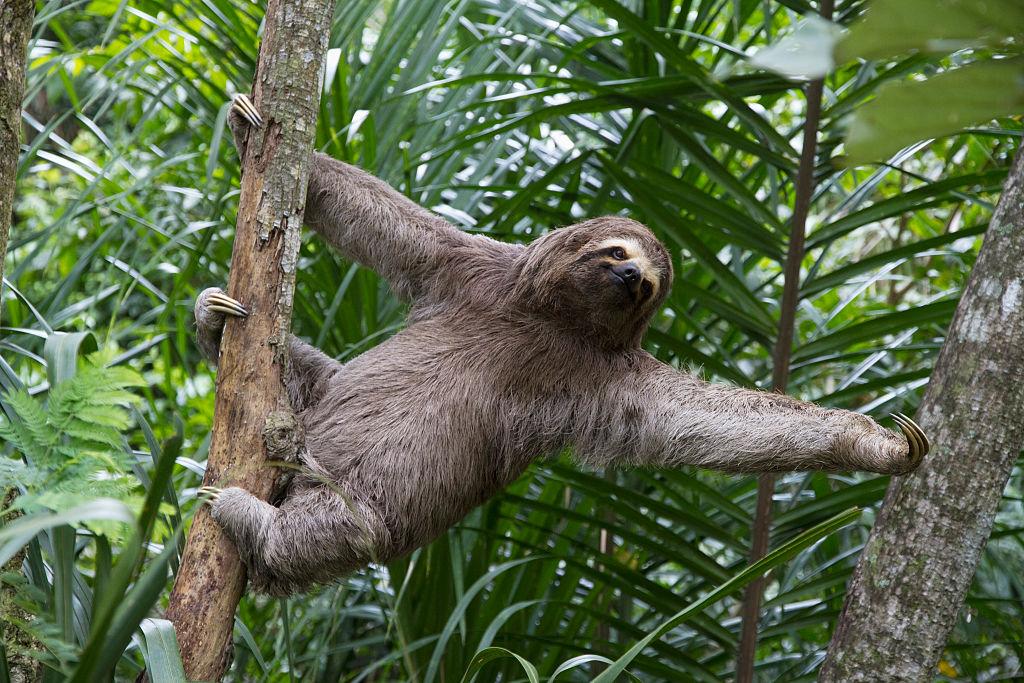 Picture of Sloth Habitat