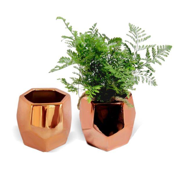 planter-e1511911820166.jpg
