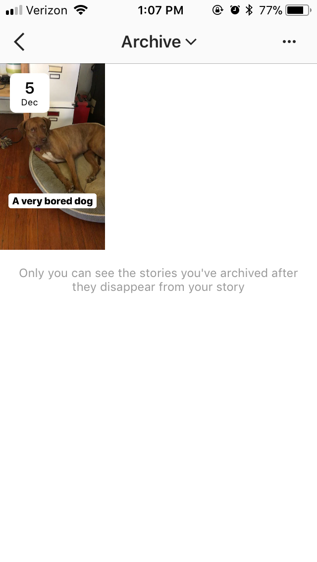 dog-archive-ig.png