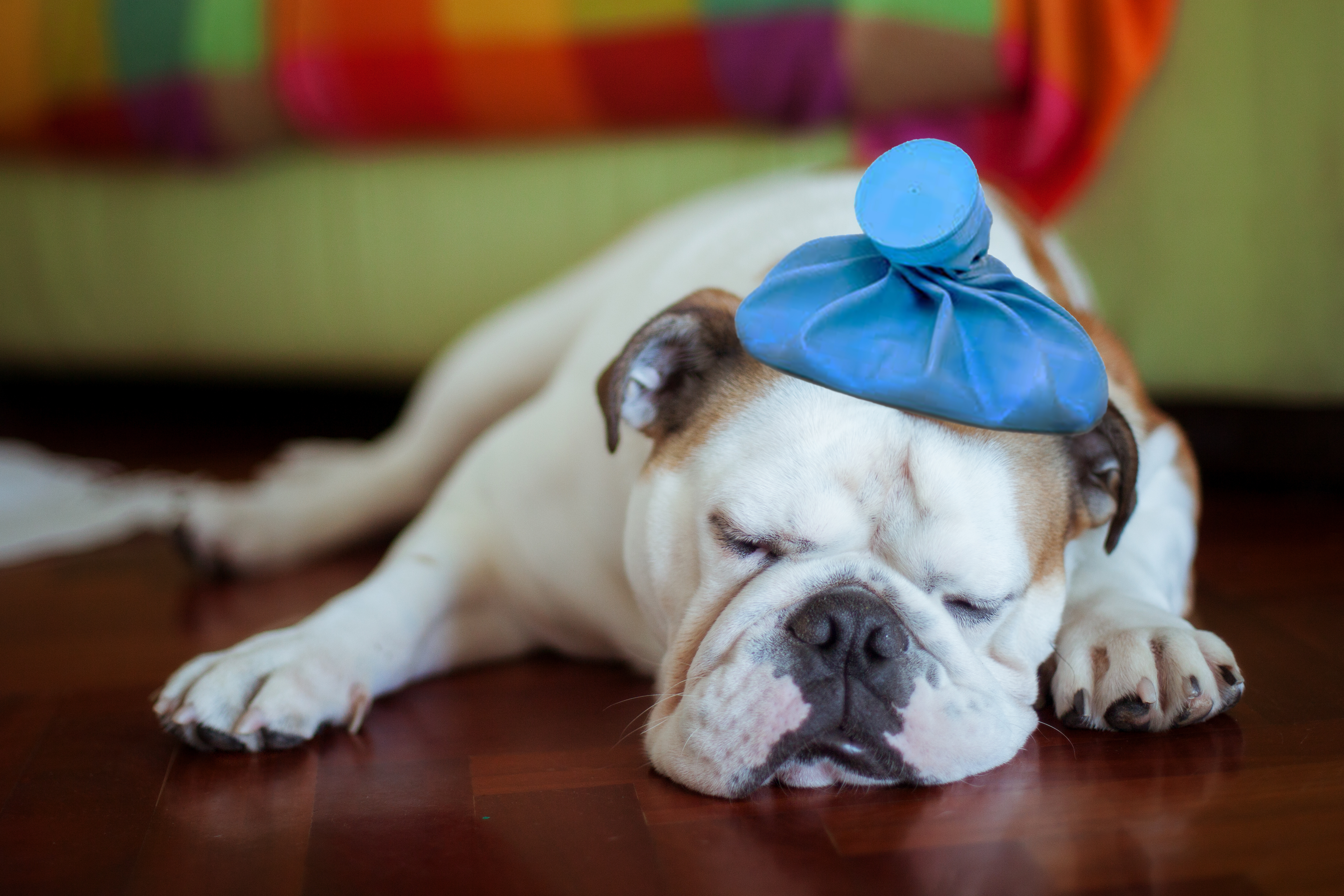 Photo of Sick Young Puppy With Ice Bag on Head