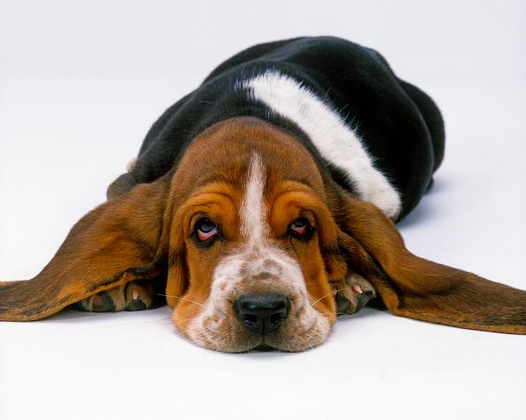 symptoms of dog flu