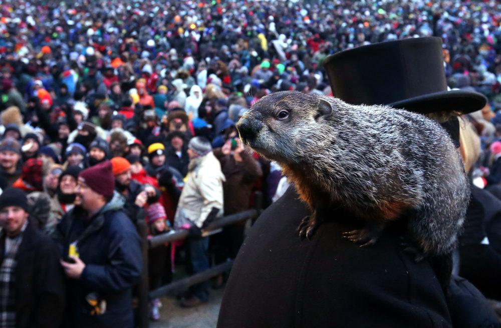 Image of Punxsutawney Phil on Groundhog Day