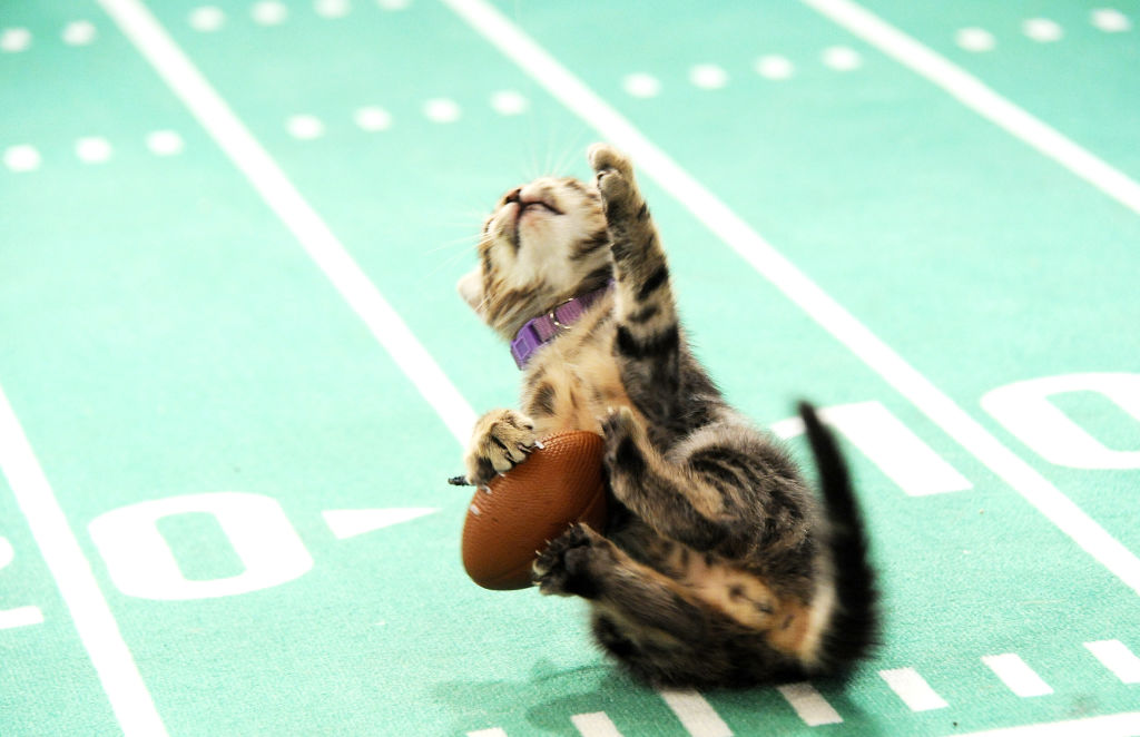 Picture of How to Watch the Kitten Bowl