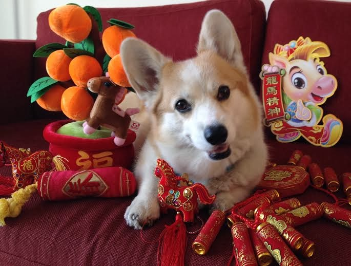 Picture of Dogs Celebrating the Year of the Dog