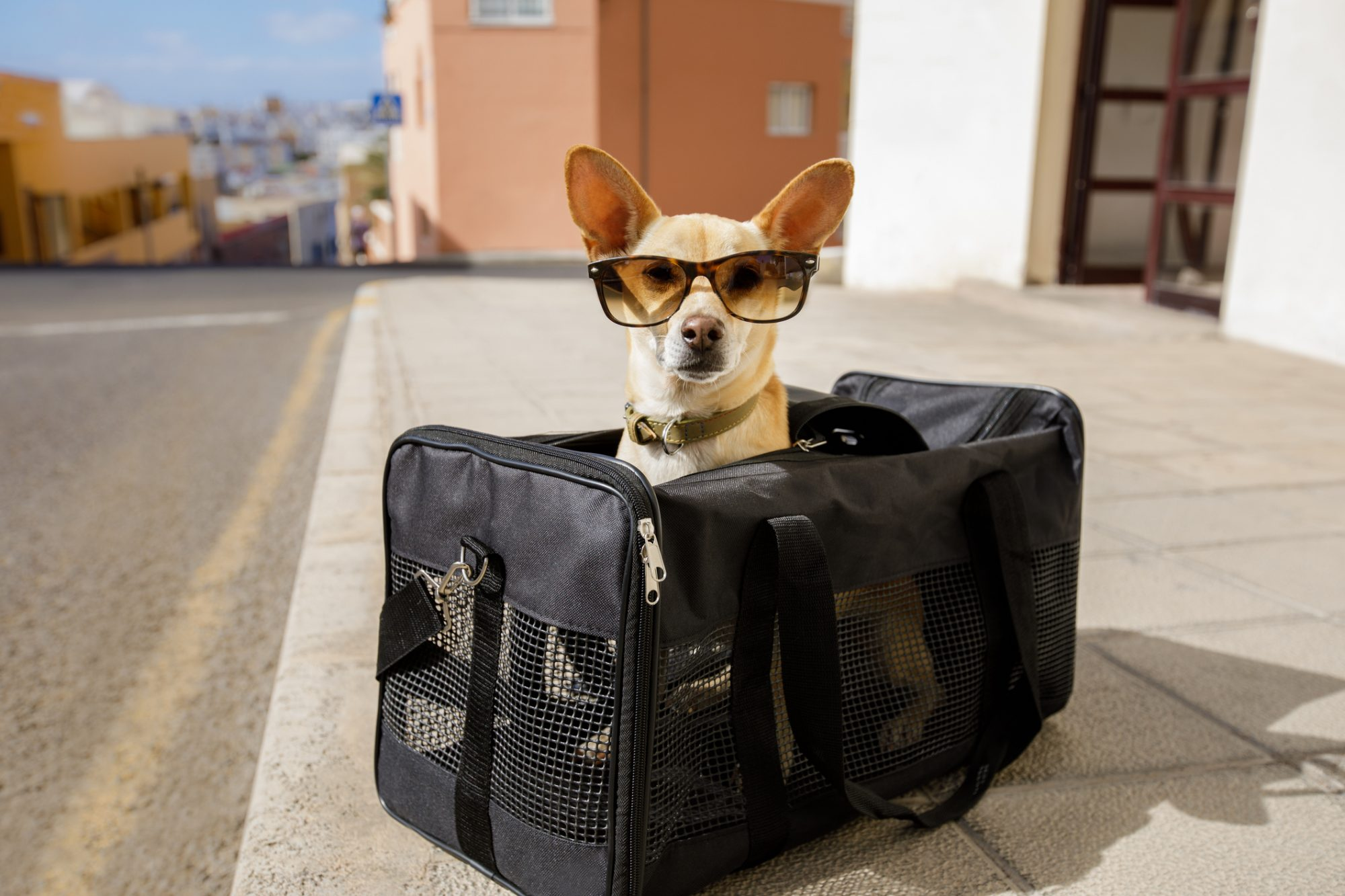 Keep your pet safe while traveling