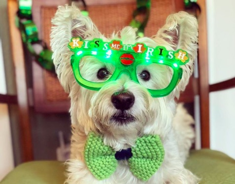 Picture of St. Patrick's Day Dogs