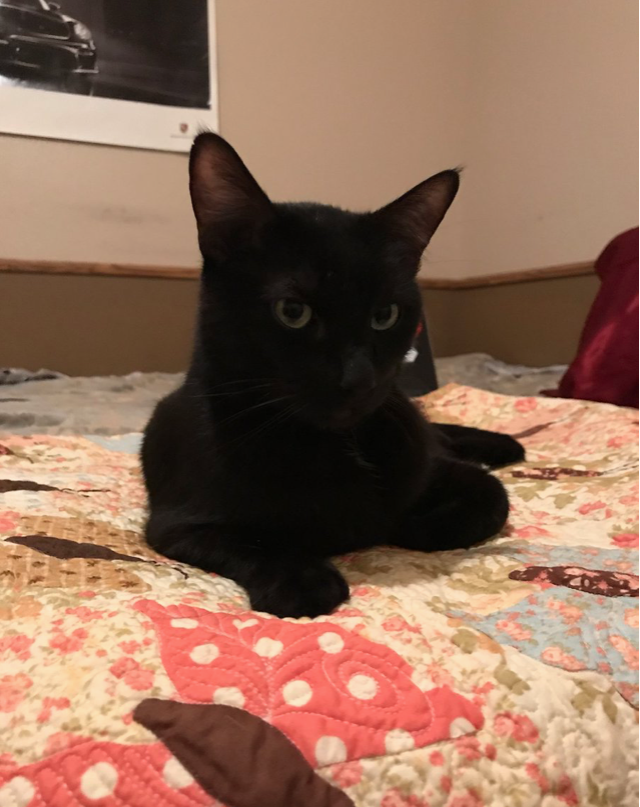 Picture of Missing Cat Story