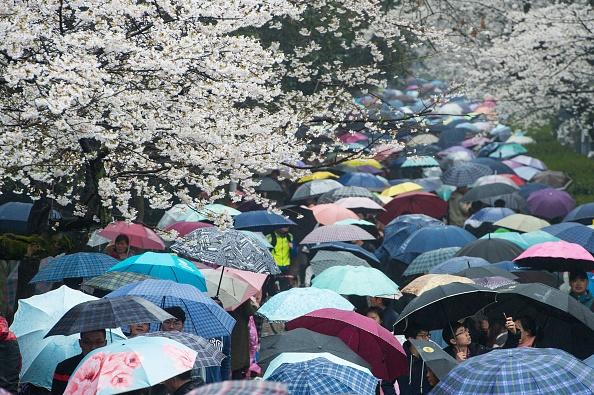 blossoms-umbrellas.jpg