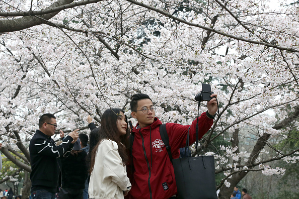 cherry-blossoms-wuhan-uni.jpg