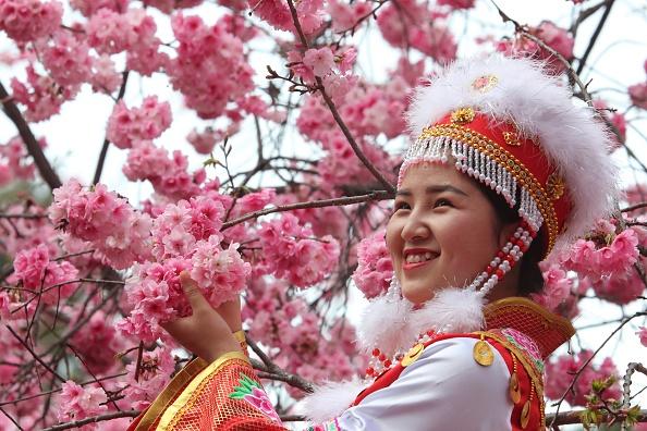 kunming-cherry-blossom-festival.jpg