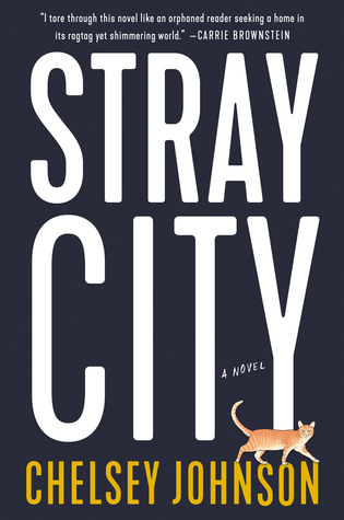 picture-of-stray-city-book-photo.jpg