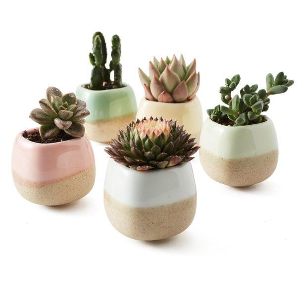 one-succulent-e1522875943835.jpg