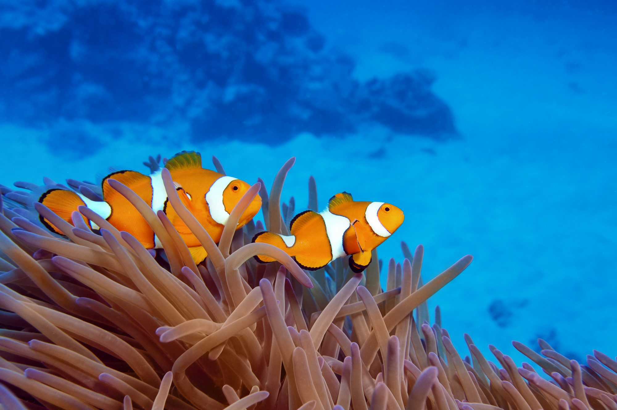 barrierfish.jpg