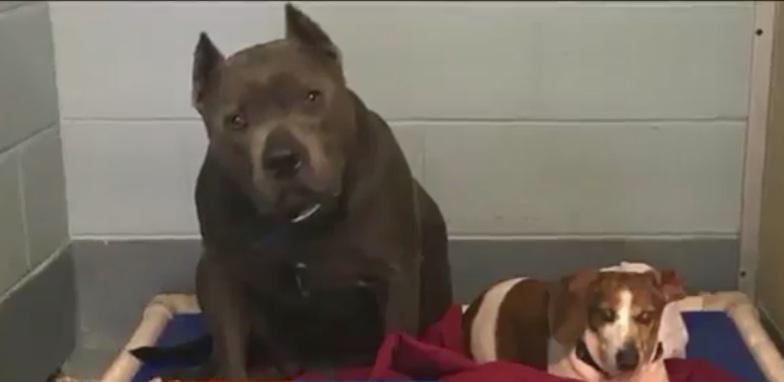 blind shelter dog friend