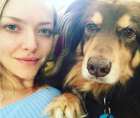 Image of Amanda Seyfried and dog