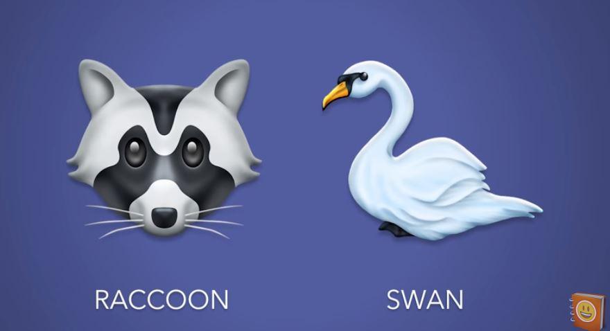 raccoon-swan.jpg