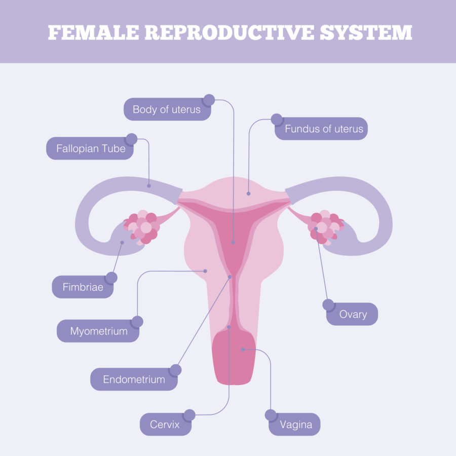 reprodu-syst-e1531432151399.jpg