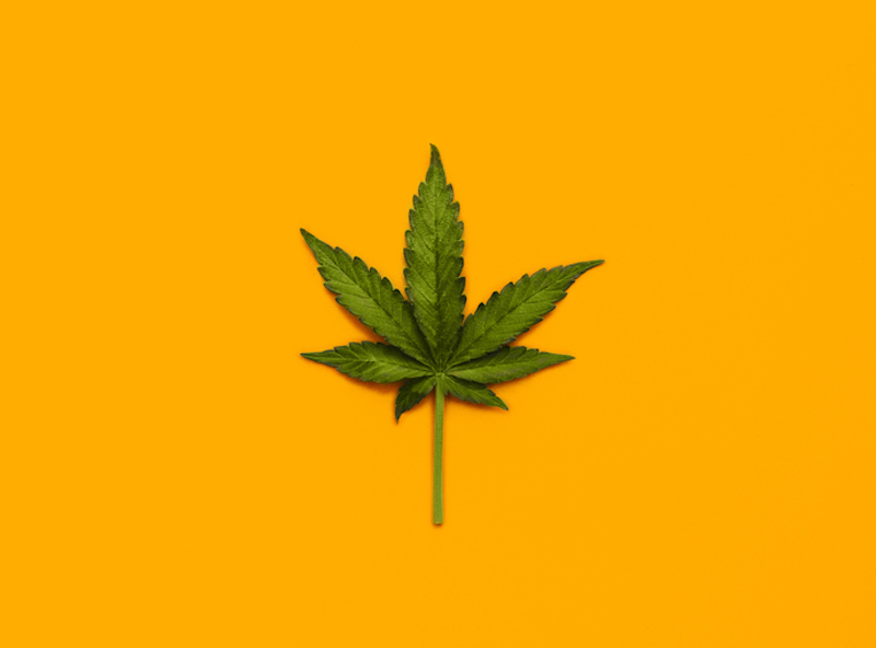 Marijuana leaf over yellow background