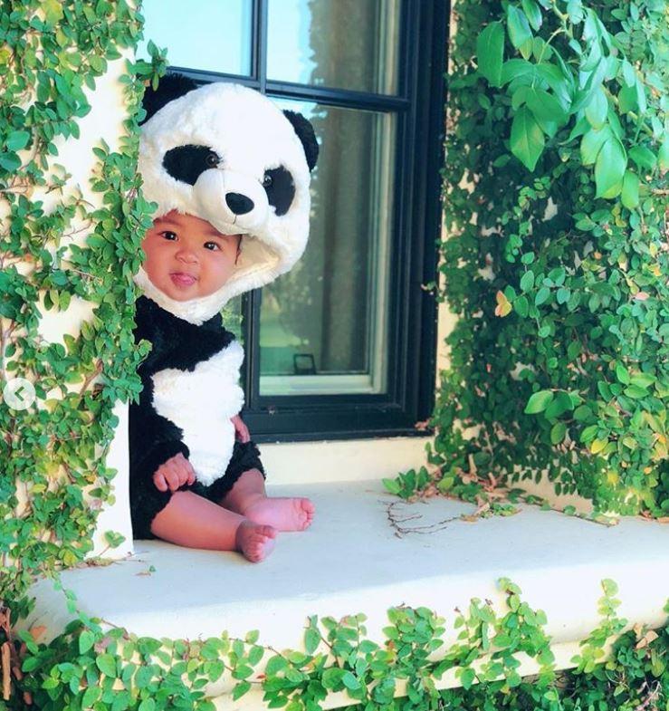 true-panda-window.jpg