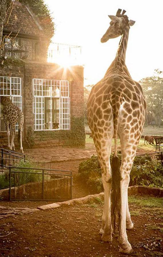 giraffe-e1542316313662.jpg