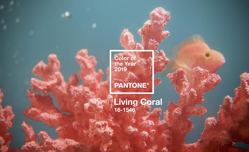 coralone.jpg
