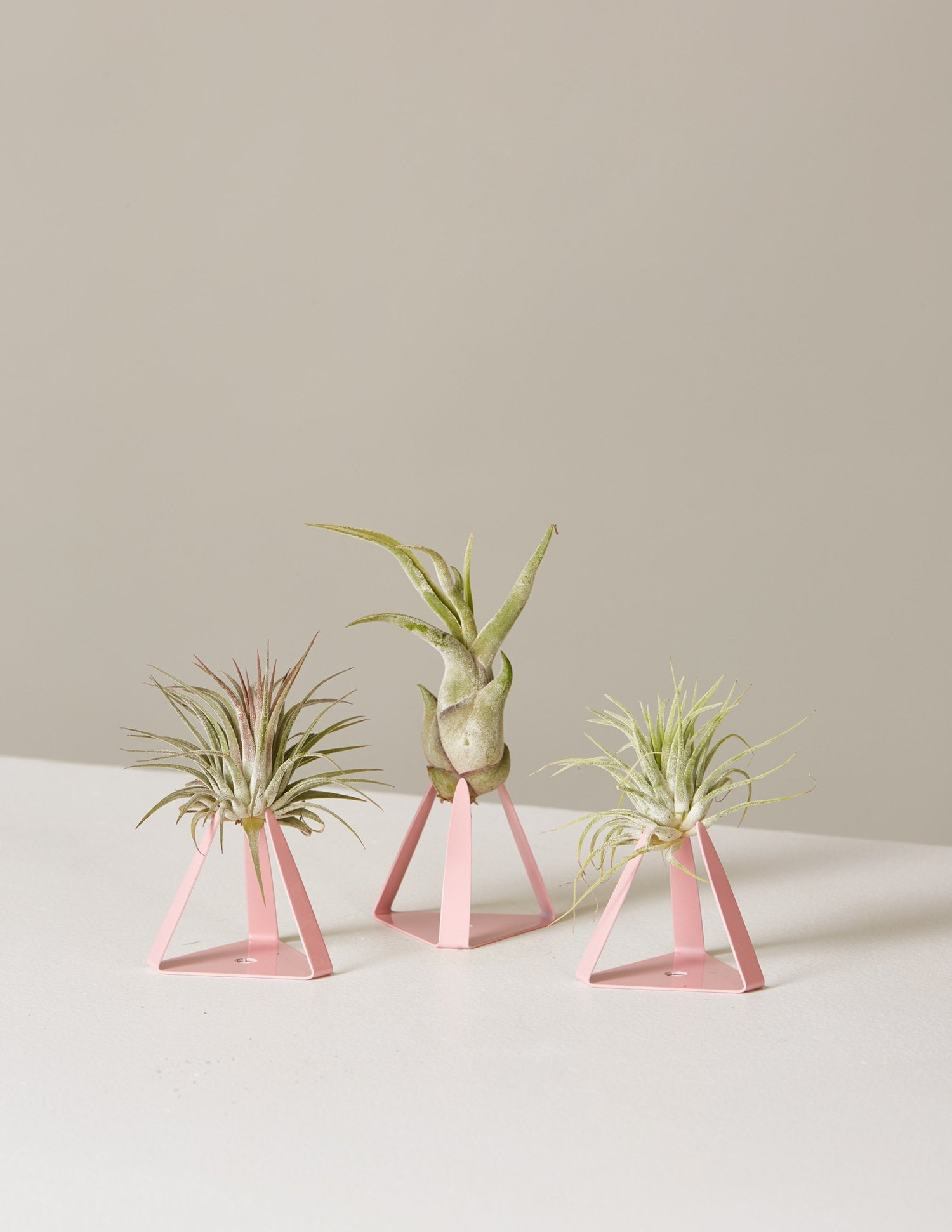 picture-of-air-plant-trio-photo1