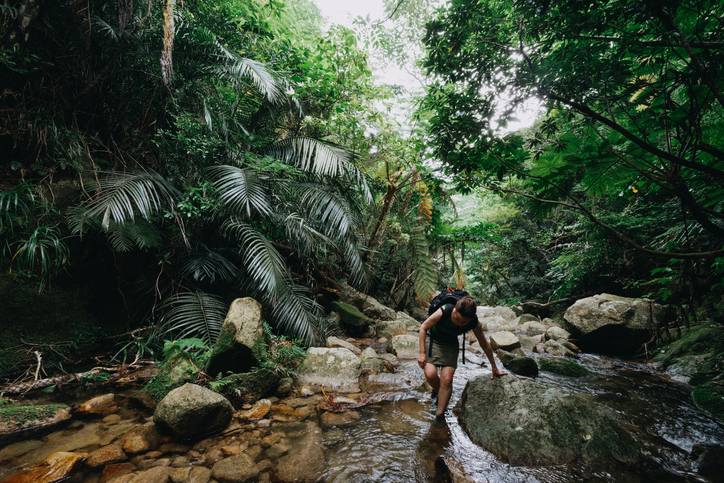 hiking-jungle.jpg