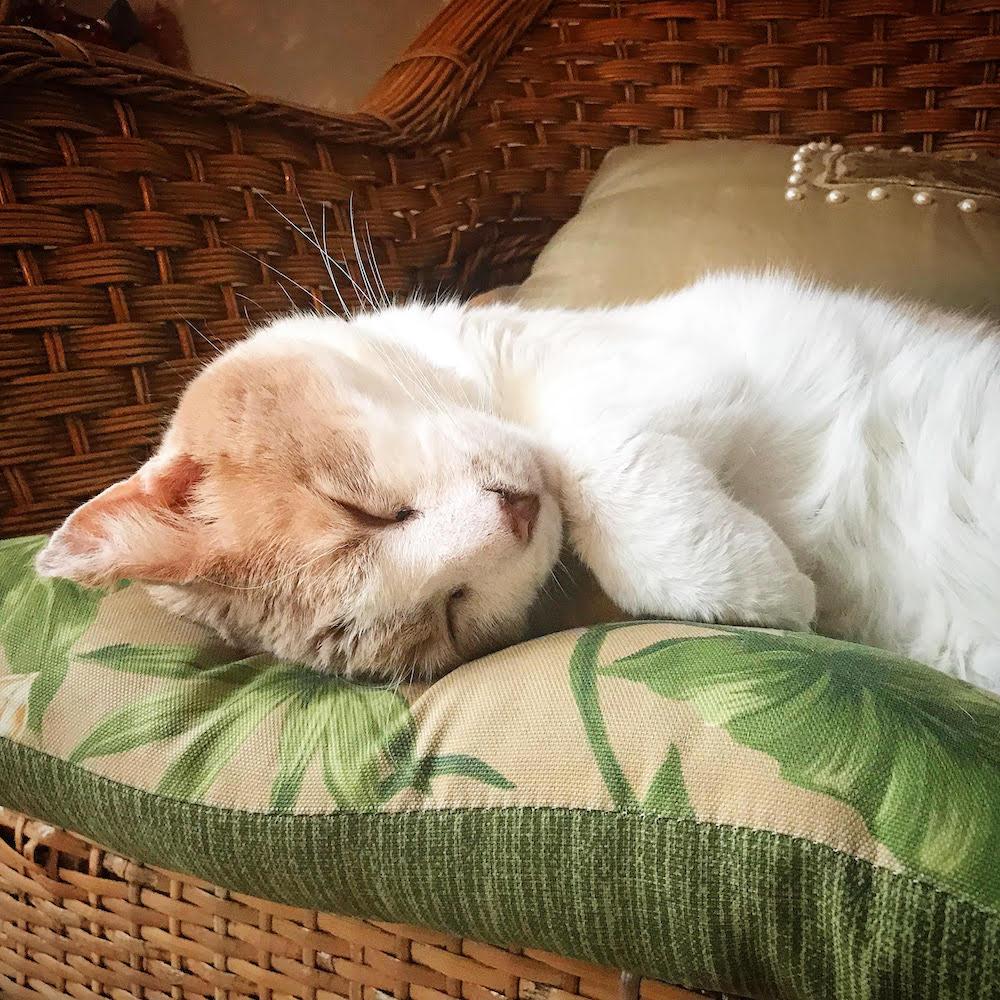 Alfie-sleeping.jpg